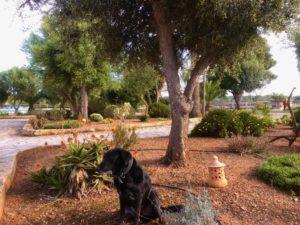 Begrüßung Finca Mallorca für 22 Personen Can Agustin