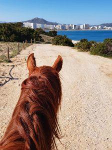 Reitausflug in Cala Millor