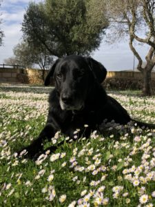 Frühling Mallorca