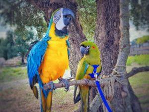 Happy-und-Sunu-Papagei-Finca-Tiere-Mallorca