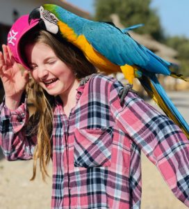 Lustiger Papagei auf Can Agustin