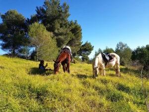 Mallorca-Ausreiten-mit-Pferden