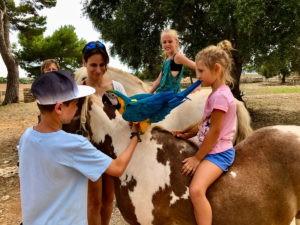 Reiten-Pferde-Tiere-auf-Mallorca