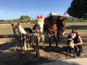 Pferde Balu, Bonny und Hans mit Trainerin Lena