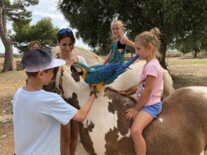 Reiturlaub Mallorca mit Pferden und Tieren