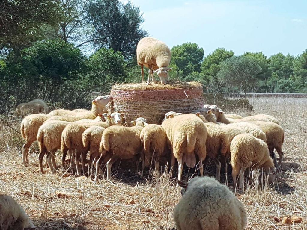 Finca Tiere Mallorca