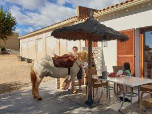 Pferd auf der Terrasse