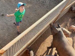 Besuch der Schweine und Ferkel